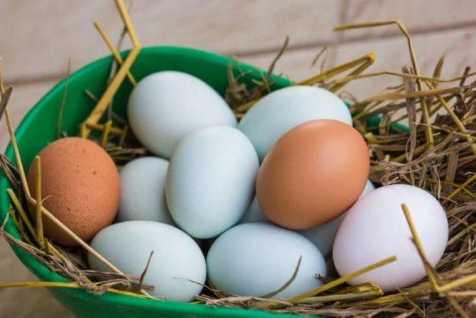 Mavi yumurtaların faydaları- Min dərdin dərmanıdır