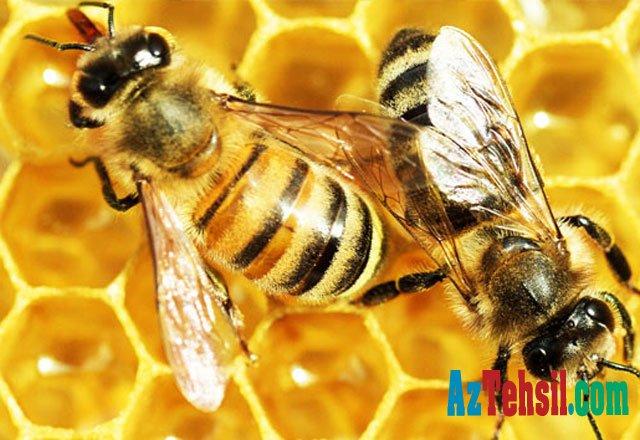 Arı sancmasının xeyri