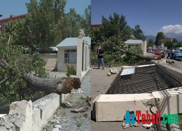 Güclü külək ağacı aşırdı: Məktəbin hasarı uçdu